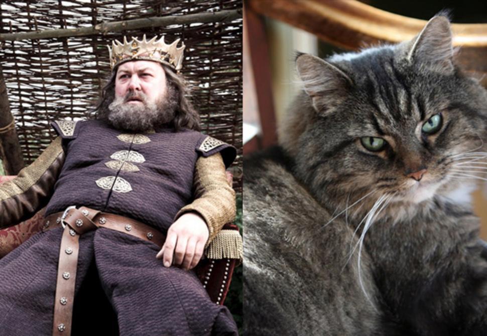 Robert cat