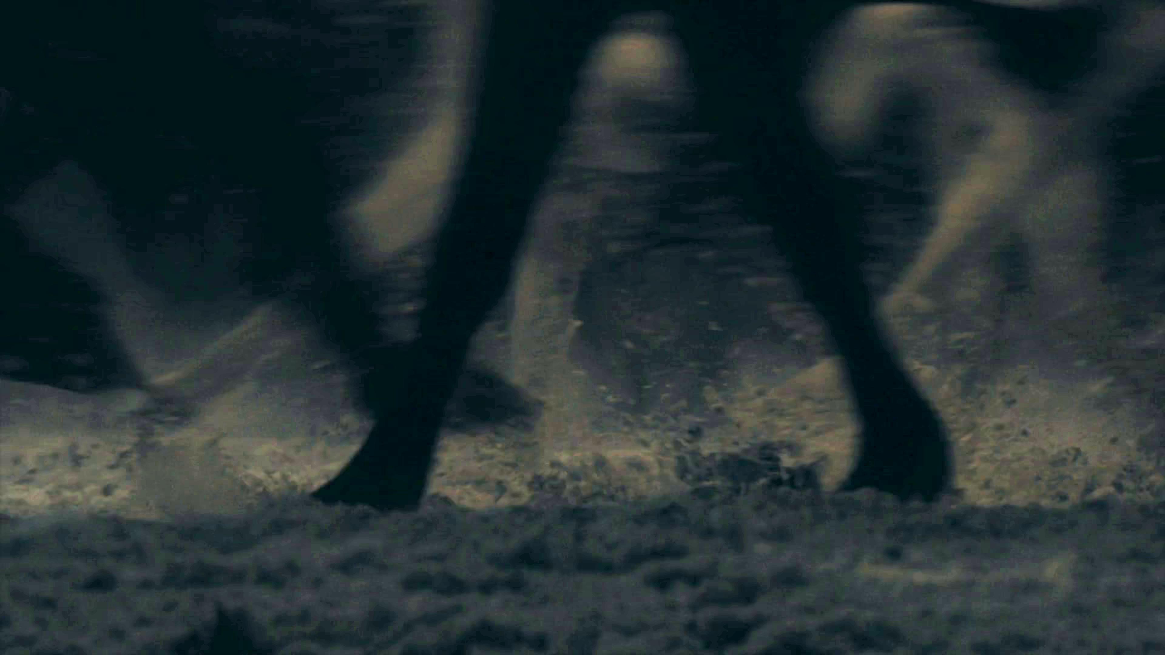37. Season 8 Trailer Horses Direwolves